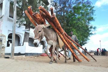 Donkey carrying wood from mangrove - Lamu Kenya