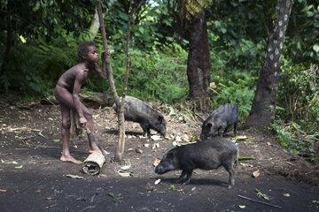 Boy feeding Pigs - Tanna Island Vanuatu