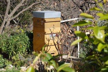 Warré hive. 3/4 view. Apiary Porte Rouge. Levens. Alpes-Maritimes. France