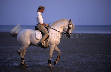 Rider on gray horse in the seaside Brittany France