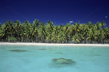Lagon and atoll with Coconut palms Toau Tuamotu Polynesia