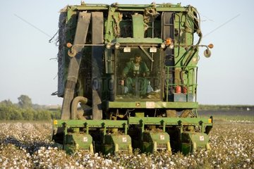 Collect mechanized Cotton in Andalusia Spain