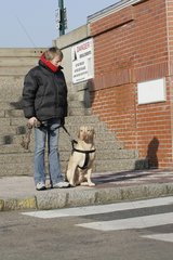 Labrador and its mistress prepared to cross the road France