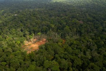 Landscape of deforestation - Forest of French Guiana - National Park of French Guiana