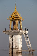 Cormorants before the altar of Buddha on Inle Lake