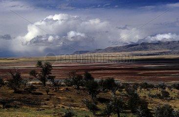 Great bog plain before a downpour Argentinian Patagonia