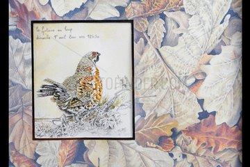 Portrait of a Hazel Grouse on dead leaves