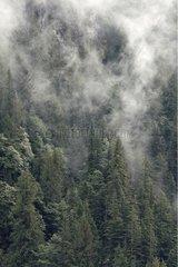 Mussel bay mist Swindle Island British Columbia