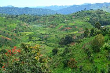 Hill cultivated - Bwindi National Park Uganda
