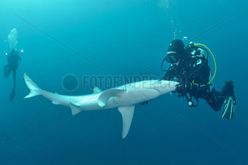 Diver and Blue Shark - South Africa