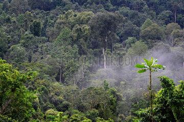 Bwindi Impenetrable National Park - Uganda