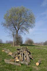 Wood firing stored in a orchard Allenjoie France