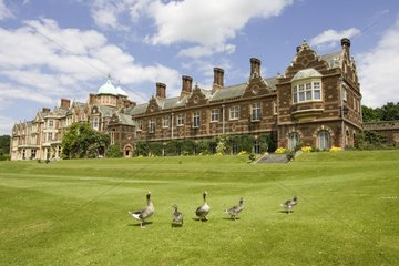 Geese on the lawn of the Sandringham country house England