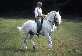 Rider riding his horse bridle and saddle dressage France