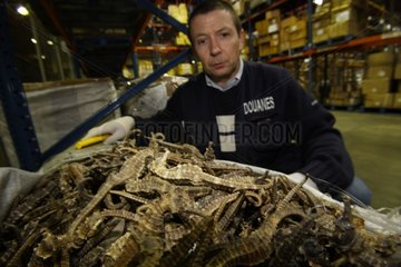 Seizure of protected Seahorses at the French customs