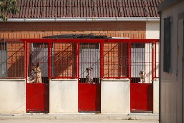 Dogs impounded pending the killing Cuenca Spain