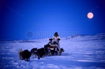 Attelage de chiens de traîneau au Clair de lune Canada