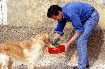 Homme tendant une écuelle de légumes à un Golden retriever