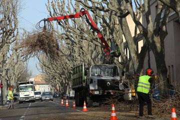 Pruning trees in the city center - Provence France