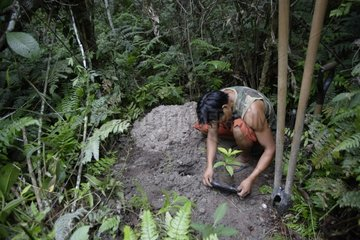 Plantation plant useful for primates Sanctuary Icamaperou