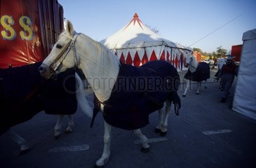 Spectacle horses to the circus France