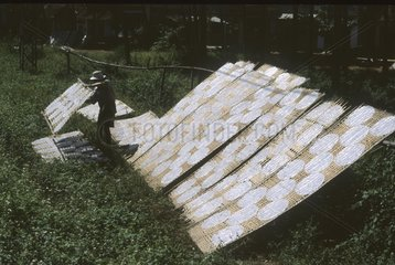 Rice wafers drying on tray of bamboo Vietnam