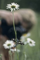 Photographs butterflies in natural environment France
