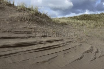 Dunes of the nature reserve of the Inch beach Ireland