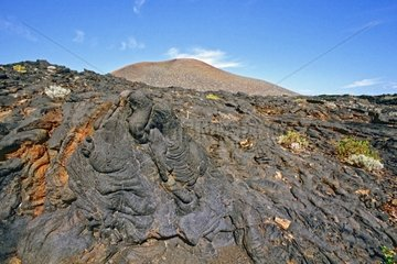 Plants colonizing a lava flow roped in the Canaries
