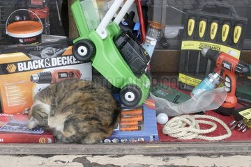 Chat sleeping in the middle of tools in a drugstore