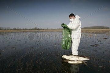 Technicien venant de trouver le cadavre d'un Cygne tuberculé