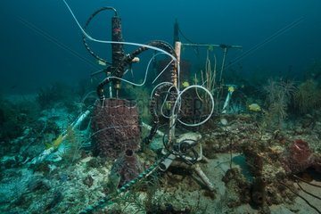 Monitoring of sponge respiration -Aquarius Reef Base Florida