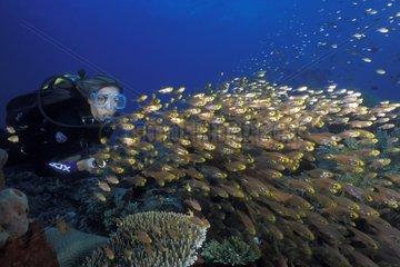 Plongeur et banc de poissons-hachette Récif de Kubu Bali