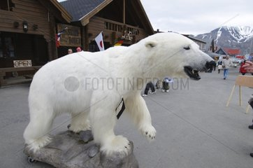 Dissected Polar Bear in the main commercial street