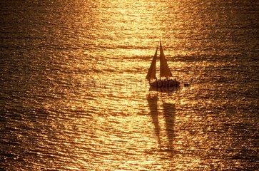 voilier sur une mer dorée  bateau  plaisance