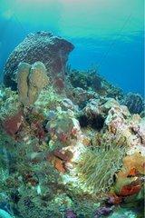 Sea bottom of the Caribbean sea