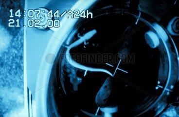Image infrarouge de l'étude sur le magnétisme et les Protées