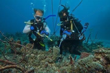 Monitoring sponge respiration - Aquarius Reef Base Florida