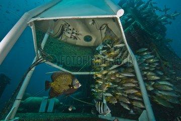 Under the Gazebo - Aquarius Reef Base Florida