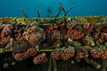 Marine life on Aquarius - Aquarius Reef Base Floride