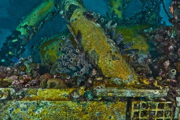Life on starboard bow section - Aquarius Reef Base Floride