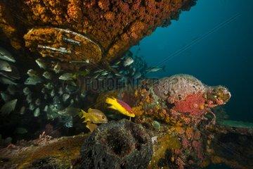 Escape hatch below bunks - Aquarius Reef Base Floride