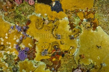 Marine life on Aquarius - Aquarius Reef Base Florida