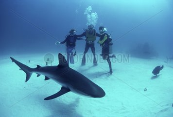 Requin de récif et plongeur père et fils Bahamas