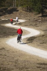 Cyclists on a cycle track in Drents-Friese Wold NP
