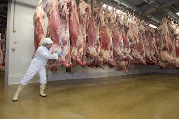 Contrôle de carcasses de bovins en chambre froide