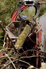 Grip catching branches Ile de Rhinau France