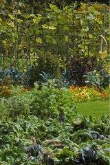 Jardin potager fleuri du Château de Cormatin