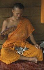 Gray kitten sleeping between the legs of a Kampuchea bonze