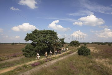 Cycling in the heather Reserve natural Stabrechtse Heide